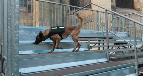Bomb-Detection-Dogs