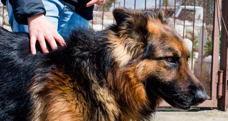 compound-guard-dog